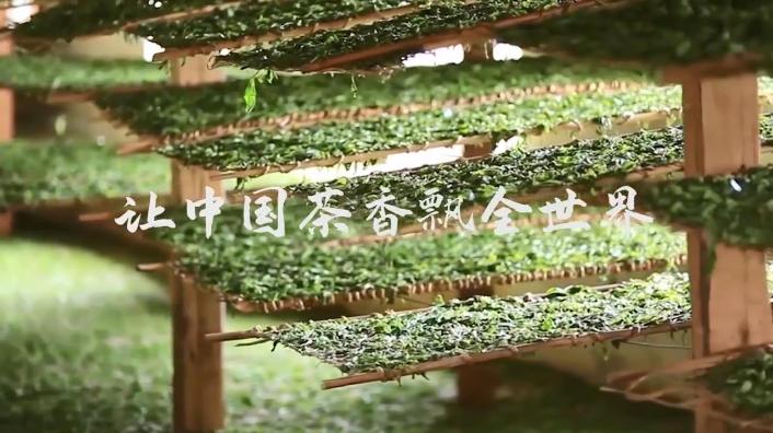 让中国茶香飘全世界——湖南农业大学园艺学院